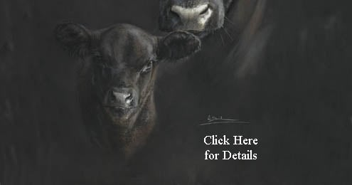 Aberdeen Angus Cow and Calf (black bottom)