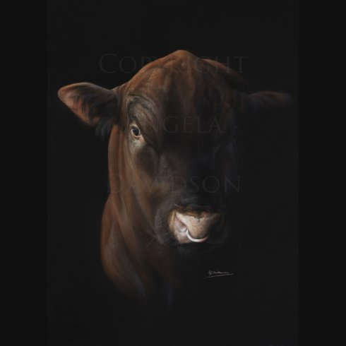 Angela Davidson Art The Red Angus
