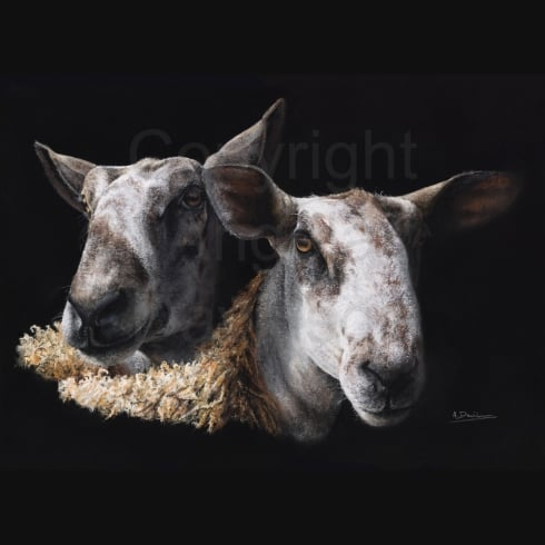 Angela Davidson Art Blue Shade Ewes