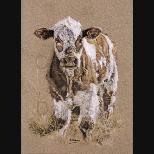 Angela Davidson Art Sandy's Calf