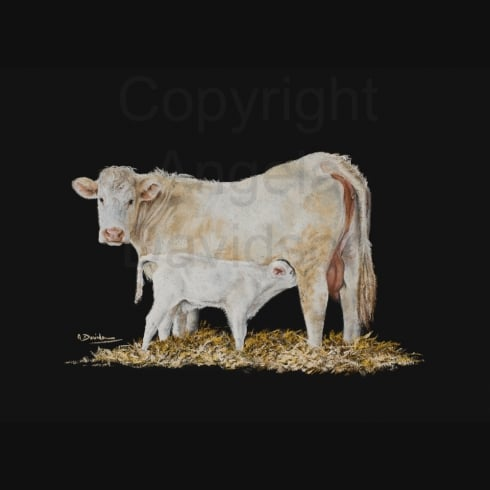 Angela Davidson Art The Milky Bar Calf